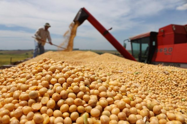 Soybean harvest in Argentina.